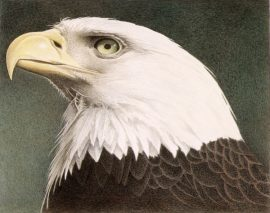 Barbara Banthien Limited Edition Print - Bald Eagle