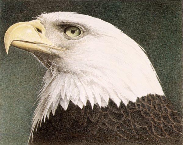 Barbara Banthien Limited Edition Print - Bald Eagle