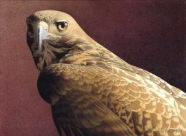 Barbara Banthien Limited Edition Print - Red Tail