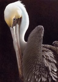 Barbara Banthien Limited Edition Print - Brown Pelican