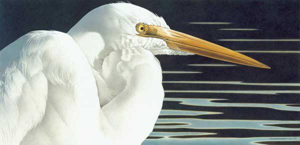 Barbara Banthien Limited Edition Print - Great Egret