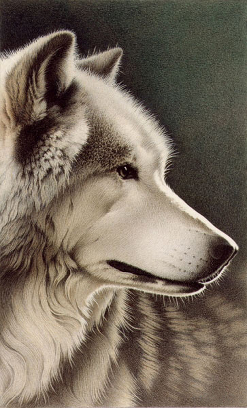 Barbara Banthien Limited Edition Print - Gray Wolf