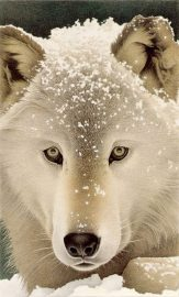 Barbara Banthien Limited Edition Print - Snow Wolf