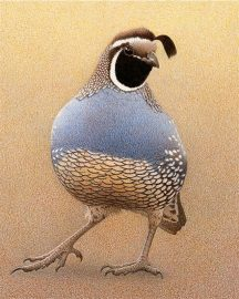 Barbara Banthien Limited Edition Print - California Quail