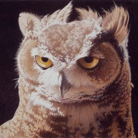 Barbara Banthien Limited Edition Print - Great Horned Owl