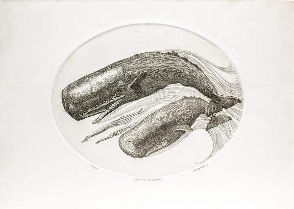 J.D. Mayhew Limited Edition Print - Sperm Whales