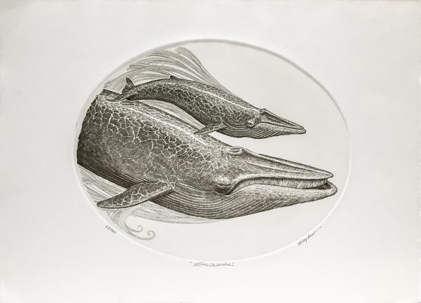 J.D. Mayhew Limited Edition Print - Blue Whales