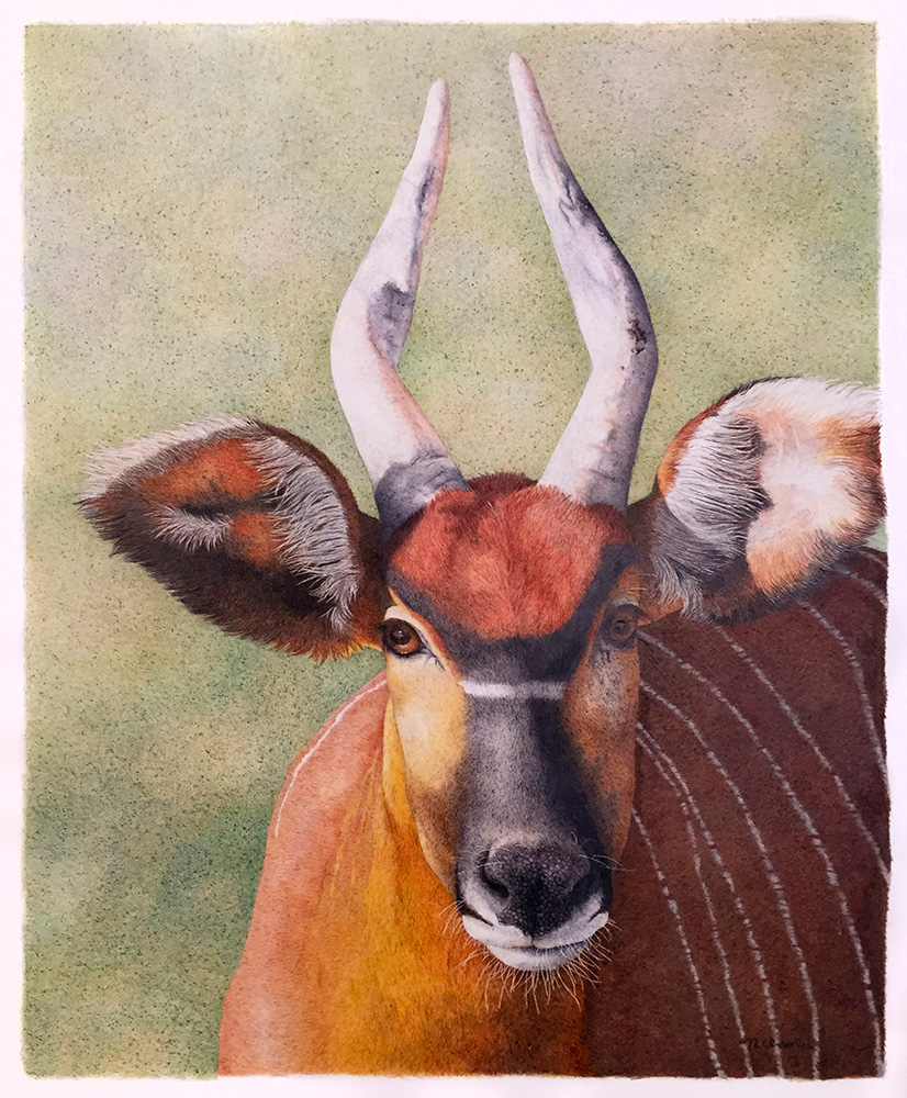 Nancy Charles Original Drawing - Antelope