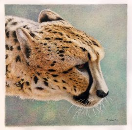 Nancy Charles Original Drawing - Cheetah