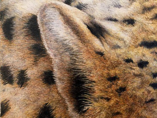 Nancy Charles Original Drawing - Cheetah