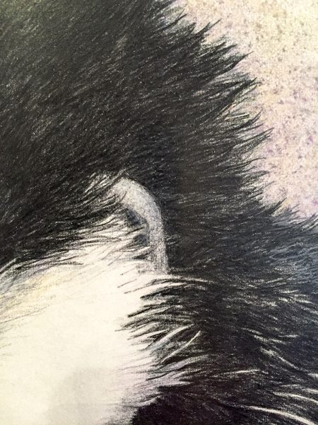 Nancy Charles Original Drawing - Mantled Guereza