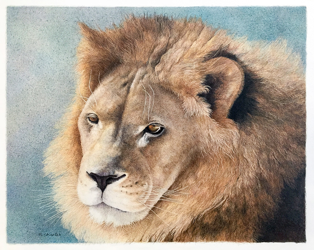Nancy Charles Original Drawing - Lion