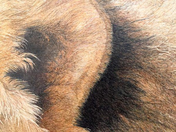 Nancy Charles Original Drawing - Lion