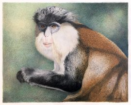 Nancy Charles Original Drawing - Mona Monkey