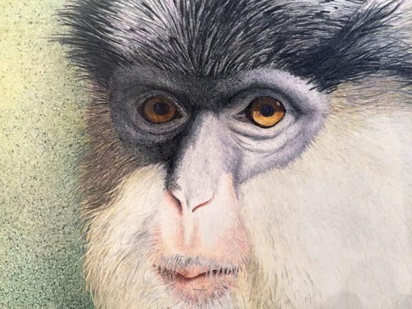 Nancy Charles Original Drawing - Mona Monkey