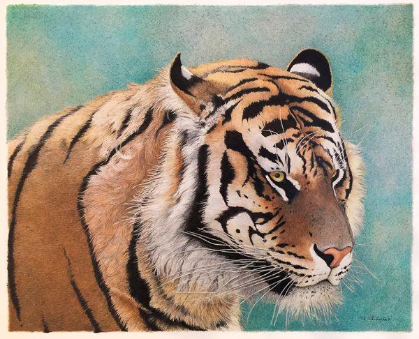 Nancy Charles Original Drawing - Tiger