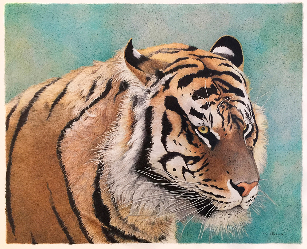 Nancy Charles Original Drawing - Tiger