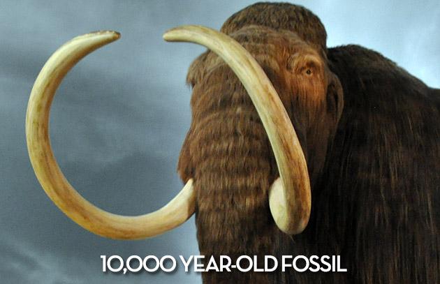 William Henry Materials - Mammoth Tusk