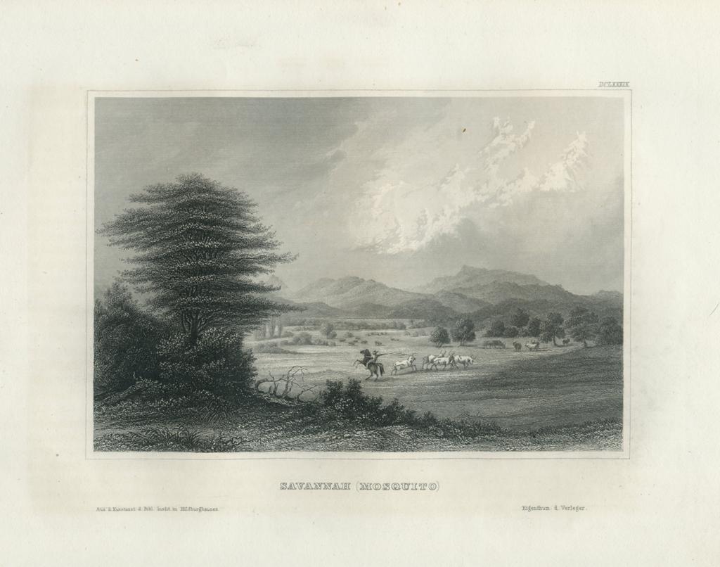 Antique Engraving - Savannah (Masquito) (1852)