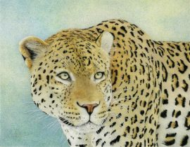 Nancy Charles - Cheetah In Wait