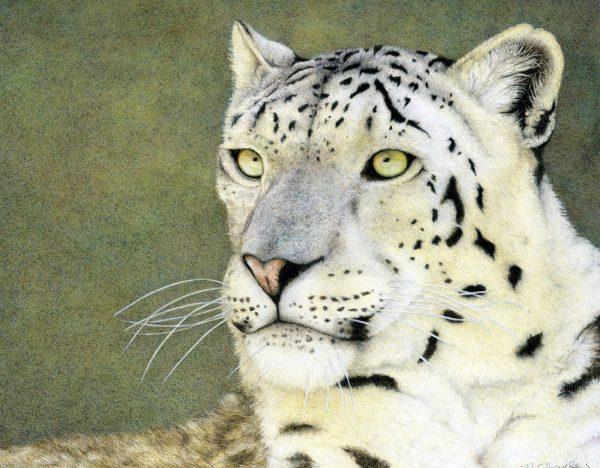 Nancy Charles - Snow Leopard