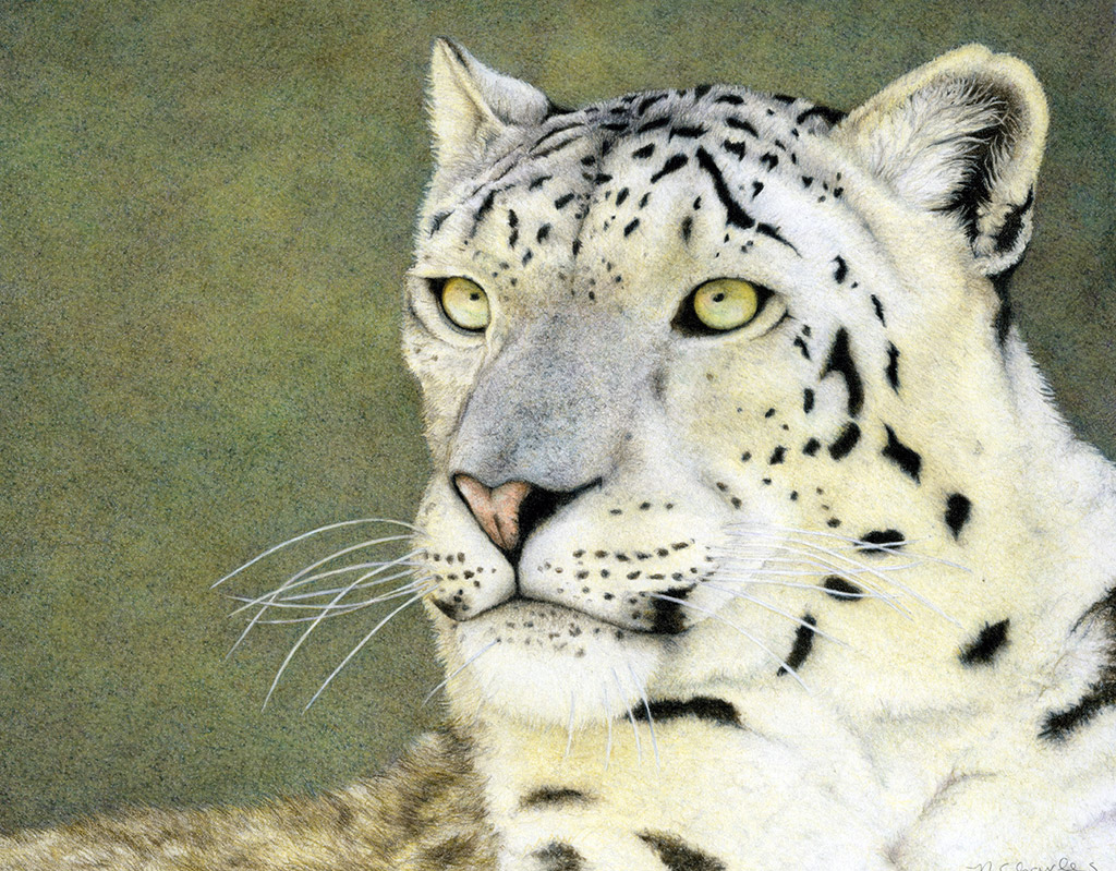 Nancy Charles - Snow Leopard