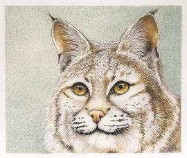 Original Bobcat Drawing - Nancy Charles