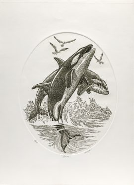 J.D. Mayhew Limited Edition Print - Orcas