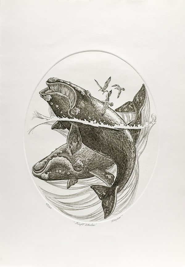 J.D. Mayhew Limited Edition Print - Right Whales