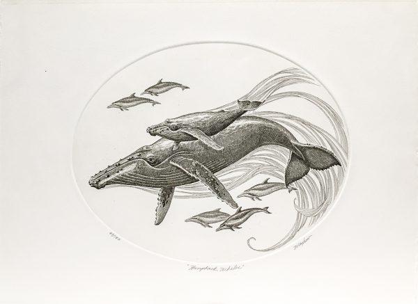 J.D. Mayhew Limited Edition Print - Humpback Whales