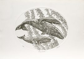 J.D. Mayhew Limited Edition Print - Gray Whales